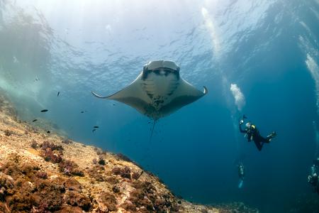 Taucher, die einen riesigen ozeanischen Mantarochen fotografieren, während er neben einem tropischen Korallenriff schwimmt