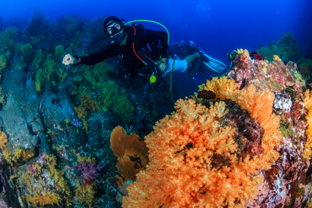SCUBA diver exploring a colorful, healthy tropical coral reef Reklamní fotografie