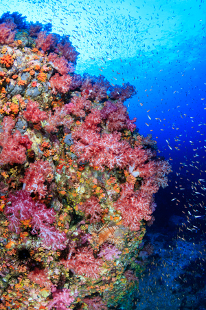 Tropical fish swimming around a vibrant, colorful tropical coral reef