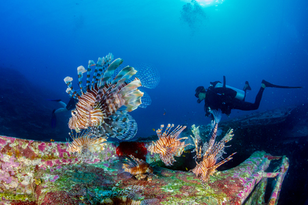 Colorful Lionfish patrolling a deep underwater shipwreck on a tropical coral reef at dawn Banque d'images