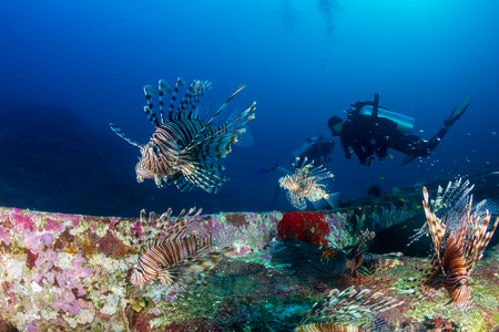 Colorful Lionfish patrolling a deep underwater shipwreck on a tropical coral reef at dawn Stock Photo