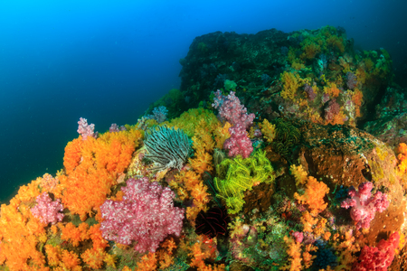 A beautiful, healthy, colorful tropical coral reef system