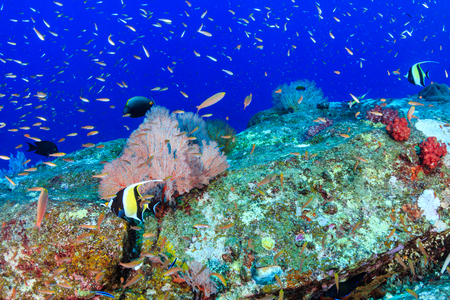 Shoals of colorful tropical fish swimming around a beautiful tropical coral reef Archivio Fotografico