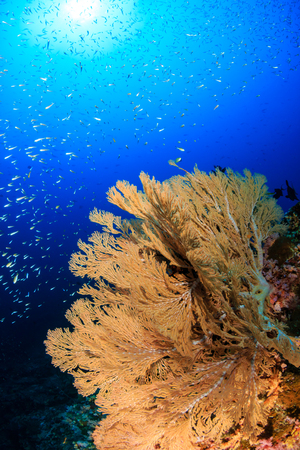 A beautiful, colorful tropical coral reef system in Asia
