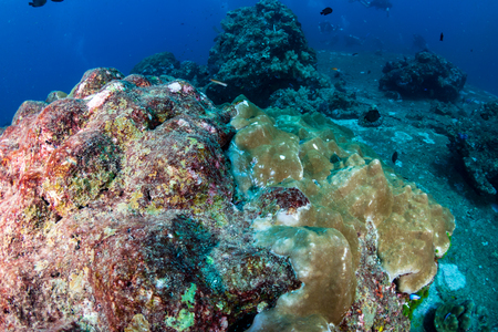 Bleached and dying hard corals on a badly damaged tropical coral reef in Asia