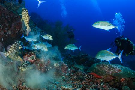 A male SCUBA diver exploring a deep tropical coral reef Stok Fotoğraf
