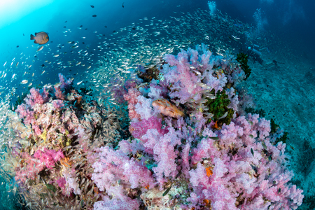 Swarms of tropical fish around a colorful coral reef