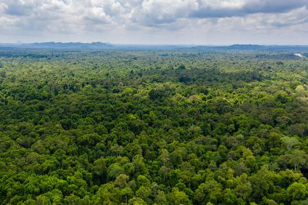 Aerial drone view of the tree canopy of dense tropical rainforest Zdjęcie Seryjne