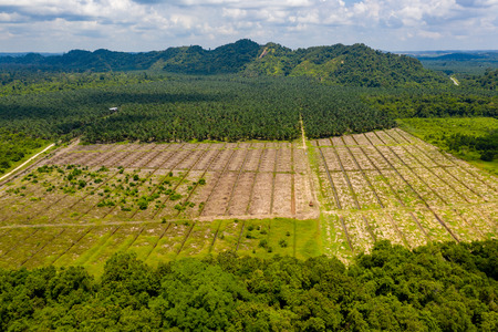 Aerial drone view of deforestation in a tropical rainforest to make way for palm oil plantations 스톡 콘텐츠