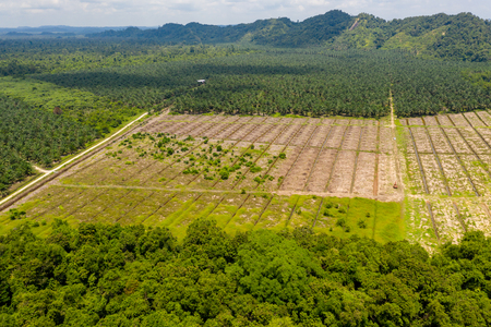 Aerial drone view of large scale deforestation in the rainforest of Borneo to make way for palm oil plantations
