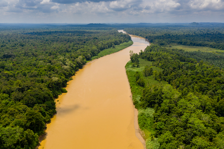Aerial drone view of a long, brown winding river through tropical rainforest (Kinabatangan River, Borneo) Standard-Bild