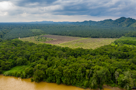 Aerial drone view of deforestation in a tropical rainforest to make way for palm oil plantations Archivio Fotografico