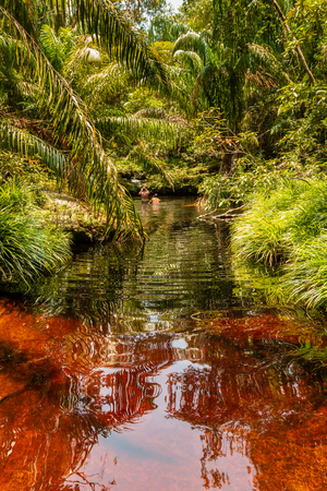A dark red, Tannin stained pool and stream in a tropical rainforest (Bako, Sarawak, Borneo) 免版税图像