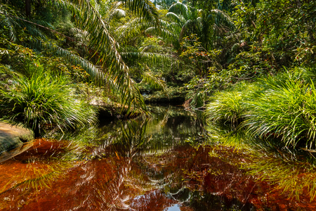 A dark red, Tannin stained pool and stream in a tropical rainforest (Bako, Sarawak, Borneo) Stock Photo