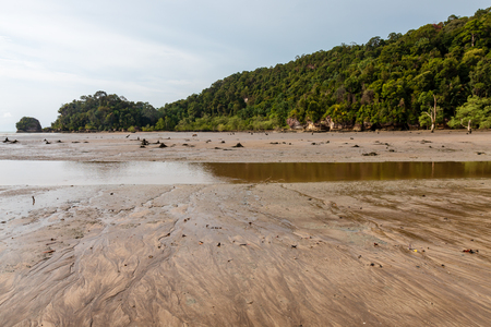 Large Mangrove Forest area at low tide in a remote part of Borneos Sarawak state