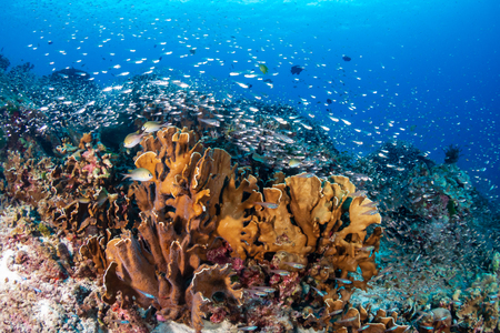 Thriving, colorful tropical coral reef, surrounded by tropical fish Stock fotó