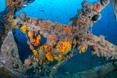 Schools of colorful tropical fish swarming around an old, broken underwater shipwreck Foto de archivo