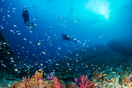 SCUBA divers swimming over a colorful tropical coral reef (Similan Islands)