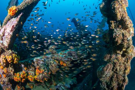 Schools of colorful tropical fish swarming around an old, broken underwater shipwreck Reklamní fotografie