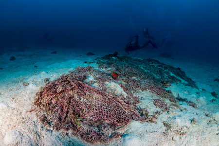 An abandoned ghost fishing net entangled on a tropical coral reef Stock Photo