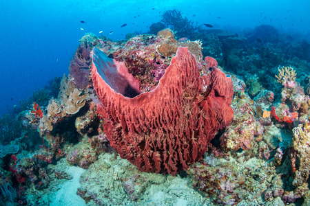 A large sponge deep on a tropical coral reef in Thailand