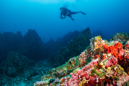SCUBA diver swimming over colorful soft corals on a tropical reef at Koh Bon, Thailand Reklamní fotografie