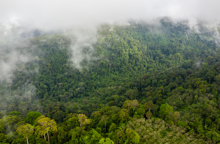 Low clouds and fog forming above mountainous tropical rainforest