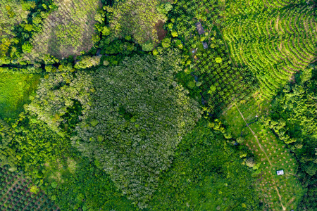 Top down aerial view of deforestation removing rainforest for palm oil plantations