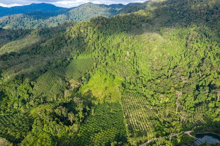 Aerial view showing tropical rainforest deforestation to make way for palm oil and other plantations Banco de Imagens