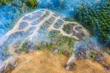Vista aerea dei droni della foresta pluviale bruciata e ripulita per far posto a piantagioni di palme e gomma
