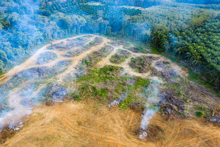 Aerial drone view of rainforest being burnt and cleared to make way for palm and rubber plantations