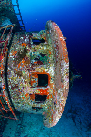 Corals growing on a large, underwater shipwreck in a tropical ocean
