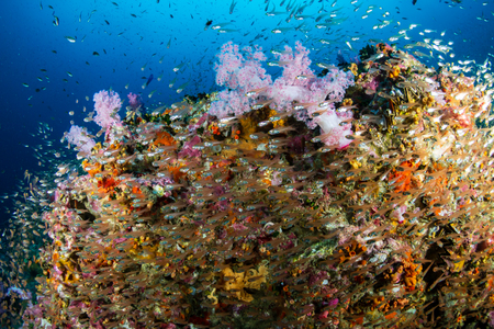 A beautiful, colorful and healthy tropical coral reef Reklamní fotografie