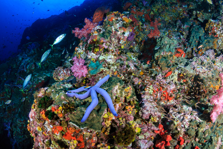 Starfish on a colorful, healthy tropical coral reef