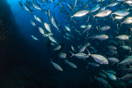 A huge school of Jacks and other tropical fish on a coral reef (Richelieu Rock, Thailand) Stock Photo