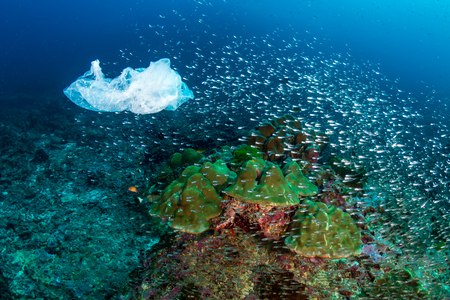 A discarded plastic bag floating past tropical fish and corals on a tropical reef (Koh Bon)