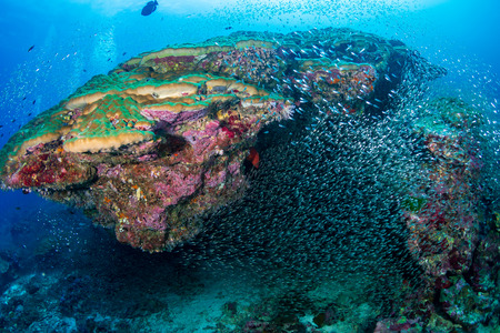 Tropical fish on a beautiful, colorful coral reef in the Similan Islands Reklamní fotografie