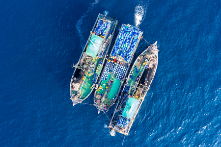 Industrial fishing - aerial view of large fishing trawlers sorting and transferring a large catch between vessels 版權商用圖片 - 117773944