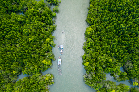 Aerial view of small boats in a huge mangrove forest