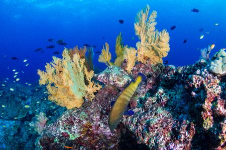 Bunte tropische Fische an einem Korallenriff in Thailand