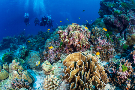 A beautiful hard coral reef in shallow water at sunrise Фото со стока