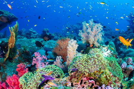Poissons tropicaux colorés sur un récif de corail dans la mer d'Andaman Banque d'images