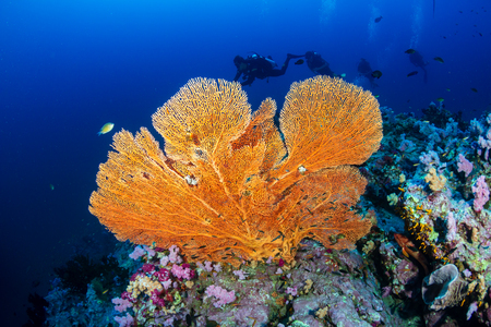 SCUBA diver on a colorful, healthy tropical coral reef
