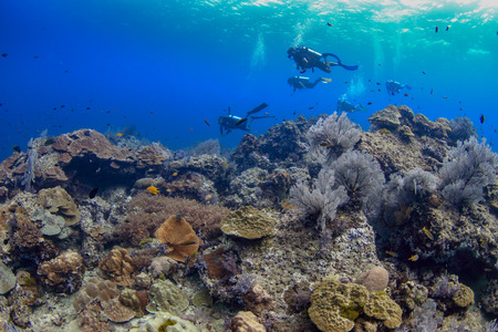 Colorful tropical coral reefscape