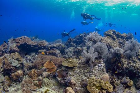 Colorido paisaje de arrecifes de coral tropicales