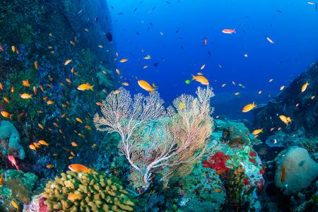 Tropische Fische schwimmen um ein wunderschönes tropisches Korallenriff Standard-Bild