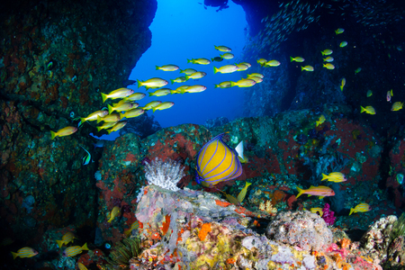 Beautiful underwater archway on a tropical coral reef with colorful tropical fish