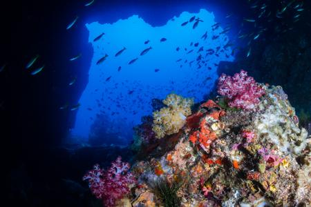 Een onderwateroverwelfde galerij op een tropisch koraalrif (Western Rocky, Myanmar)