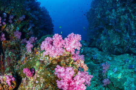 A colorful tropical coral reef (Western Rocky, Myanmar)