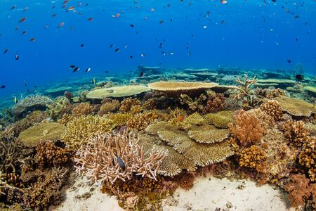 A beautiful, healthy shallow water tropical coral reef Reklamní fotografie - 129539960
